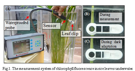 Fig.1. The measurement system of chlorophyll fluorescence in rice leaves underwater.