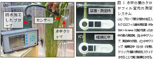 図1 水中の葉のクロロフィル蛍光の測定システム