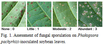 Fig.1. Assessment of fungal sporulation on Phakopsora pachyrhizi-inoculated soybean leaves.