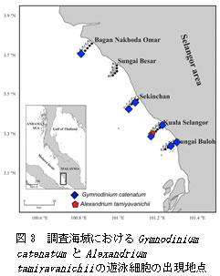 図3 調査海域におけるGymnodinium catenatumとAlexandrium tamiyavanichiiの遊泳細胞の出現地点