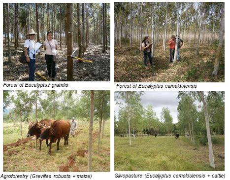 Figure 2. Photographs of established forest in the A/R CDM project in Paraguay