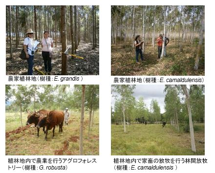 図2 植林CDM事業の概要