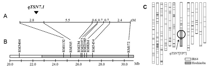 Fig. 1. Chromosomal location of qTSN7.1 and graphical genotype of NIL with qTSN7.1.