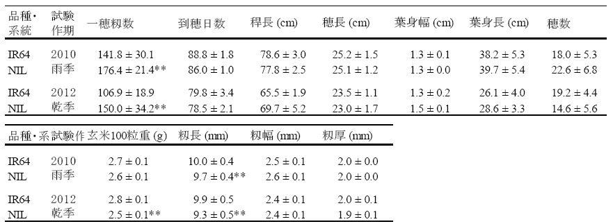 表1 qTSN7.1をIR64の遺伝的背景に導入した準同質遺伝子系統(NIL)における農業形質