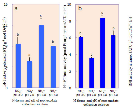 Fig. 1. Influence of N-forms and root exudate collection solution pH on biological nitrification inhibition release and root plasma membrane H+-ATPase in sorghum grown hydroponically for 14 days with NH4++ or NO3- as N source.