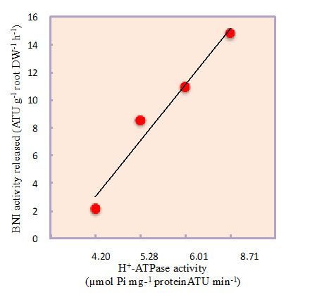 Fig. 2. The relationship between BNI release from sorghum roots and root PM H+-ATPase activity at various concentrations of NH4++ (0 to 1.0 mM) in the root exudate collection solutions.