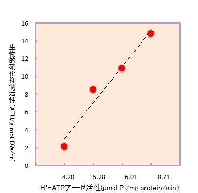 図2 水耕栽培におけるソルガムの根からの生物的硝化抑制物質の分泌量と細胞膜H+-ATP アーゼ活性との関係性