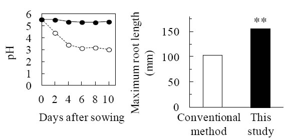 Fig.1. pH maintenance of nutrient solutions (left) and recovery of root elongation (right) in this study (improved method).
