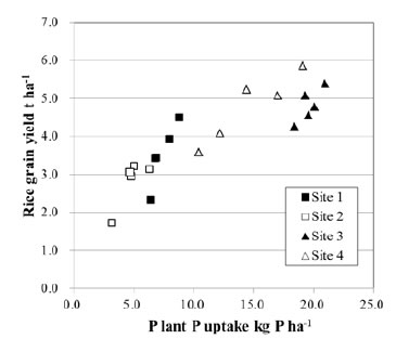 Figure 2. Relationship between plant P uptake and rice grain yield under BPR direct application.