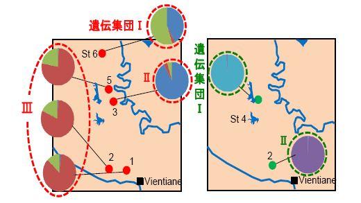 図3 Esomus metallicus (左)及びParambassis siamensis(右)の遺伝的集団構造(各個体群の標本数は32個体)