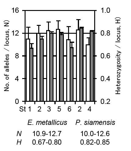 Fig. 2. Genetic diversities of two species based on no. of alleles (white bars) and heterozigosity (grey bars).
