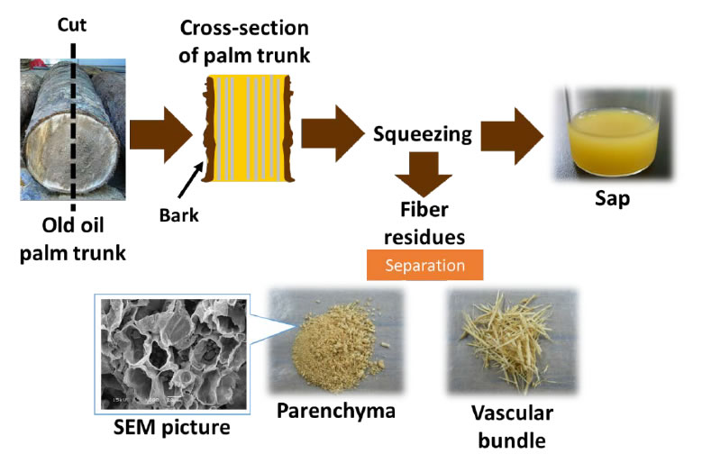 Fig. 1. Sap and fiber residues from oil palm trunk.