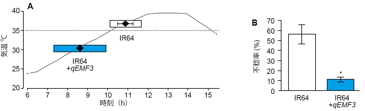 図2 早朝開花系統の高温条件下での開花特性(A)と不稔率(B)