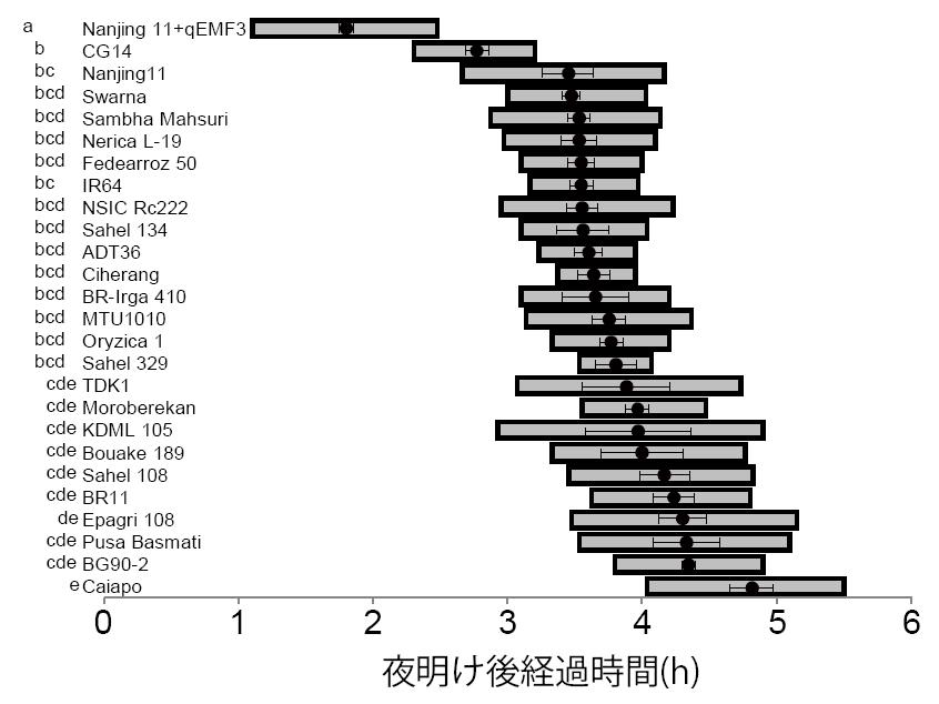 図1 南京11号の早朝開花系統(Nanjing11+qEMF3)と各主力品種との開花時刻の比較