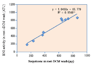 Fig. 2. The relationship between total sorgoleone concentration (μg) and BNI activity (ATU) in root–DCM wash of three sorghum genotypes