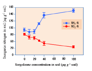 Fig. 4. Concentration of inorganic N (NO3− and NH4+) in soil samples incubated after adding different concentrations of sorgoleone (0, 10, 20, 30, 40, and 100 μg g−1 soil) for 60 days