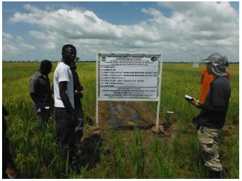 Fig. 2. Demonstration in an on-farm field (at Ziong Village, a suburb of Tamale City)