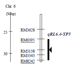 Fig. 2. Physical position of qRL6.4-YP5 on the long-arm region of chromosome 6. Closed vertical column indicates candidate region for qRL6.4-YP5. Closed triangle indicates the position of the peak F score.