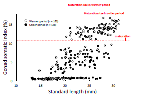 Fig. 2. Relationship between standard length and gonad somatic index in female Rasbora rubrodorsalis both in warmer and colder periods