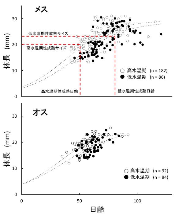 図3 Rasbora rubrodorsalisの雌雄別成長モデル(Gompertz growth curveを適用)