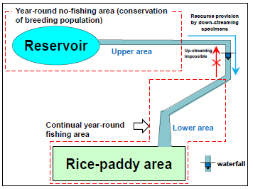 Fig. 4. Schematic drawing of the stream investigated in this study and the suggested year-round no-fishing area and continual fishing area for Rasbora rubrodorsalis