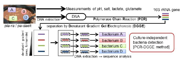 Fig. 1. Scheme of the taste component measurement and genetic identification of bacteria by culture independent method (PCR-DGGE)