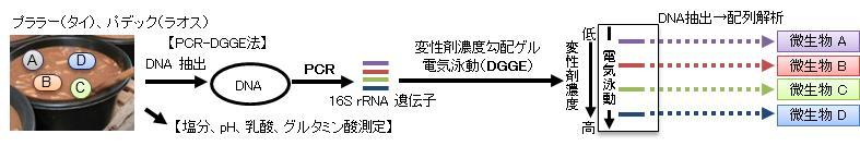 図1 遺伝子配列に基づく網羅的微生物同定(PCR-DGGE法)と呈味成分分析の概要