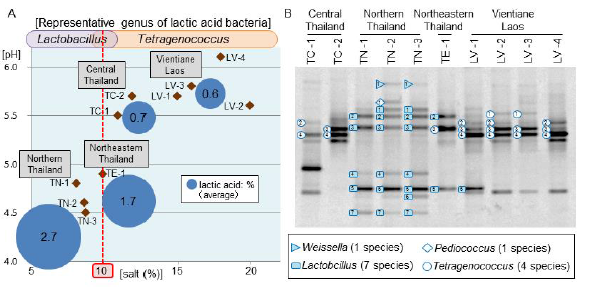 Fig. 2. A: Correlation and regionality of the taste components; B: Characteristics of lactic acid bacteria species detected by the PCR-DGGE method