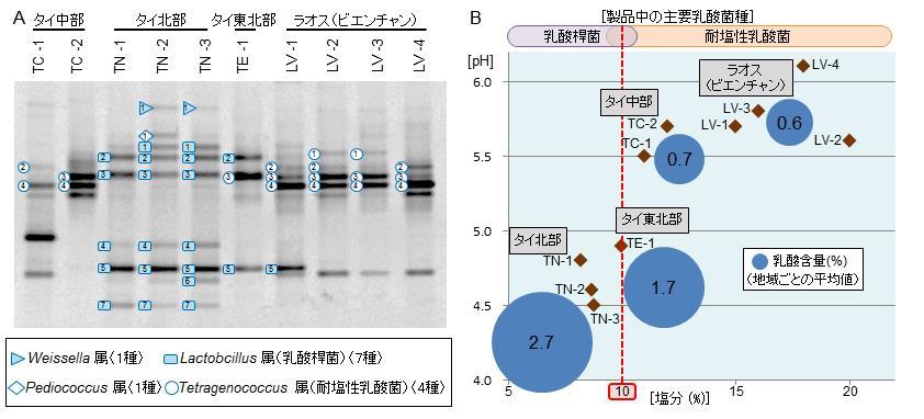 図2 プララー、パデックからPCR-DGGE法で検出した乳酸菌に見られる地域性(A)と、製品中の塩分、pH、乳酸含量および検出された主要乳酸菌の相関(B)