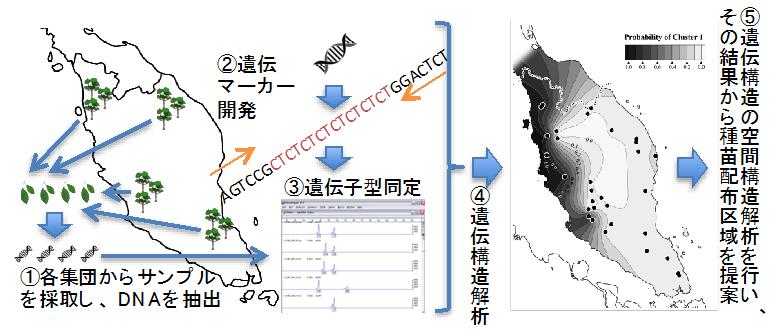 図1 種苗配布区域を提案するための解析の流れ(1〜5)