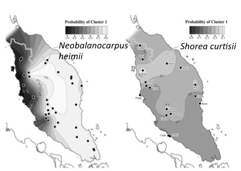 図2 遺伝構造のパターンが異なる主要樹種の例