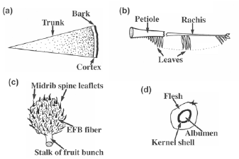 Fig.1. Parts of the oil palm(a: cross-section of trunk, b: frond, c: empty fruit bunch, d: cross-section of fruit)