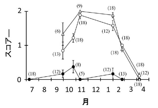 図1 肉眼観察によるハイガイの生殖腺部位の肥大状況