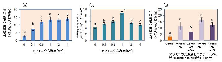 図1 ソルガム根から分泌される硝化抑制物質の採取時においてアンモニウム(NH4+)がその分泌(a)と細胞膜H+-ATPアーゼ活性(b)に及ぼす影響、及びATPアーゼ阻害剤バナテートの添加が及ぼす影響(c)