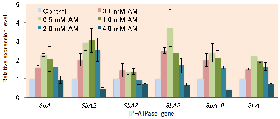 Fig. 2. The expression of six sorghum PM H+-ATPase genes in response to NH4+ (AM) nutrition