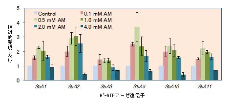 図2 NH4+(AM)の濃度ごとのソルガム根での各細胞膜H+-ATPアーデ遺伝子の発現比較