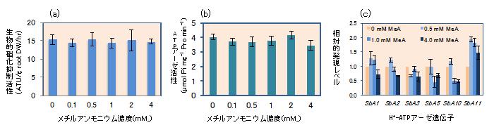 図3NH4+の非代謝類自体メチルアンモニウム(MeA)がソルガムの根での硝化抑制物質の分泌(a)、H+-アーゼ活性(b)、H+-アーゼ遺伝子の発言(c)に及ぼす影響