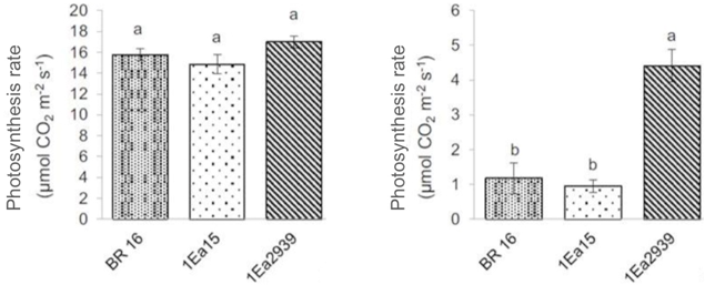 Fig. 2. Photosynthetic rate of soybean transgenic lines 1Ea15 and 1Ea2939 transformed with 35S:AtAREB1 and non-transgenic BR 16, grown under well-watered conditions (left) and under water deficit (right).
