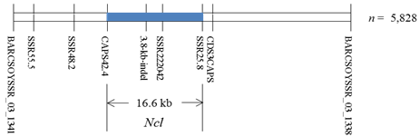 Fig. 1. Fine mapping (n = 5,828) delimits Ncl to a 16.6-kb region between markers SSR25.8 and CAPS42.4 on chromosome 3.