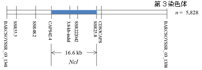 図1 耐塩性遺伝子(Ncl)の物理的地図