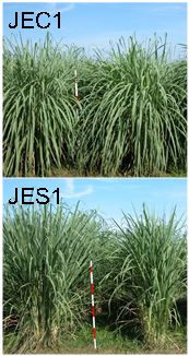 Fig. 1. JEC1 vs JES1