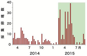 図2 ラオスにおける屋外トラップでの産卵数推移
