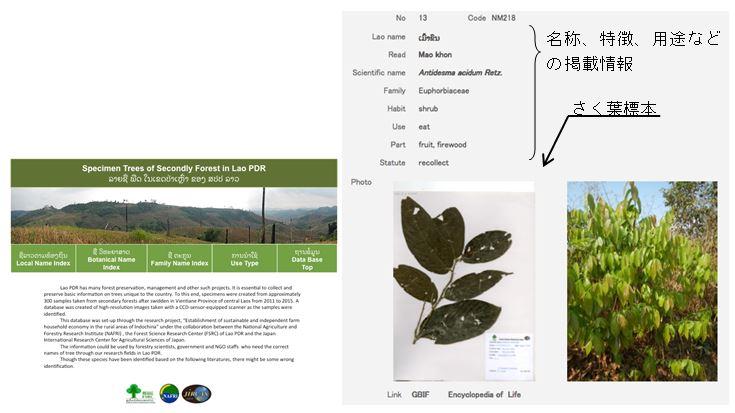 図1 焼畑二次林に出現する樹木データベース(左:検索画面、樹種別情報画面)
