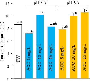 Fig. 3. The length of soybean sprouts treated by TW and SAEW after five days of germination