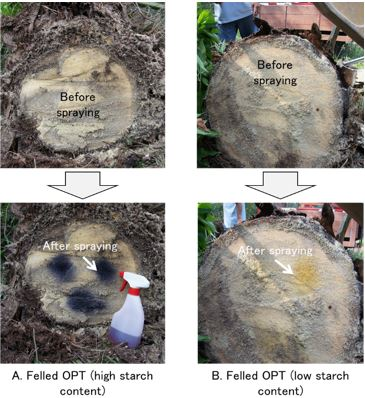 Fig. 1. Spray tests using iodine solution for felled oil palm trunk (OPT).