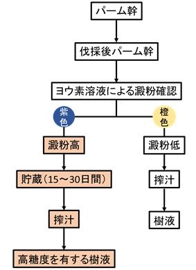 図3 貯蔵工程を考慮した伐採パーム幹からの樹液搾汁工程
