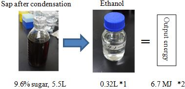 Fig. 2. Calories in ethanol from fermentation of palm sap (Output energy)
