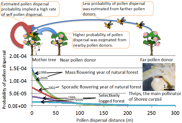 Fig. 1. Probability of pollen dispersal with distance between mother tree and pollen donors.