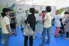 「マメ科作物の展示」にて珍しいマメに関心を示す市民