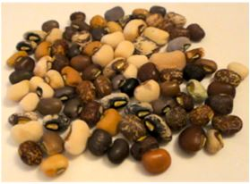 Fig. 1. Various cowpea grains